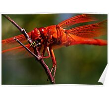Down The Hatch - Flame Skimmer Dragonfly Poster