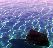 Stingray at Sunset - Parker Point, Rottnest by Andy Sinclair