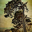 Antique and Textured Tree - Mt. Scott, Oklahoma by Jim Felder