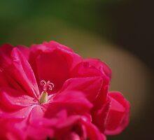 Small things..... by Alicia  Liliana