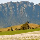 Mt. Roland,  northwestern Tasmania. by paul k