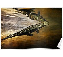 Reptile Relecting Poster