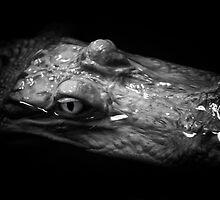 Gator Eye by Bob Larson