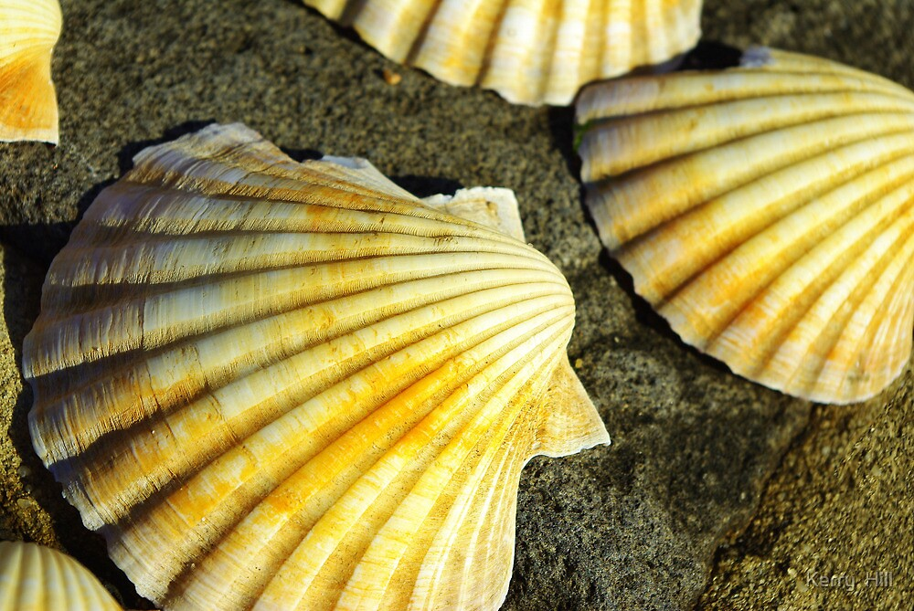 She sells sea shells.... by Kerry  Hill