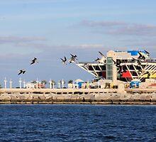 The Birds, The Pier, The Blues by Terra Berlinski