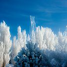 Sunshine on a Frosty Day by Ken Fortie