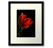 The Tulips  Framed Print