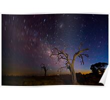 Star Trail Tree Poster