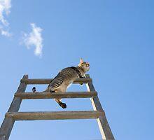 Cat in the sky by Yurgis