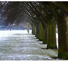 Winter scene in Eaton Park Norwich 2010. Photographic Print