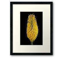 Mango Parfait Framed Print