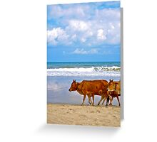 Cows on the Beach Greeting Card