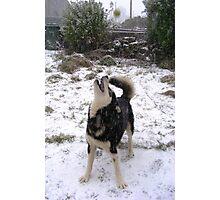 Having a 'snow' ball Photographic Print