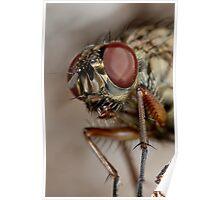 Fly head macro Poster