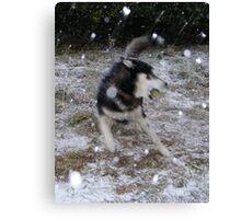 Snowstorming Canvas Print
