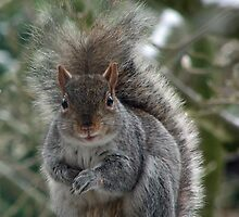 Grey Squirrel staring me out! by Lou Chambers