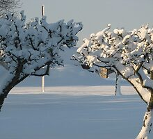Apple Trees in Snow by Lou Chambers