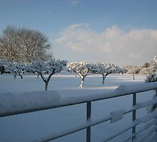 Snowy View with Apple Trees by Lou Chambers