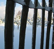 Snowy view through fencing by Lou Chambers