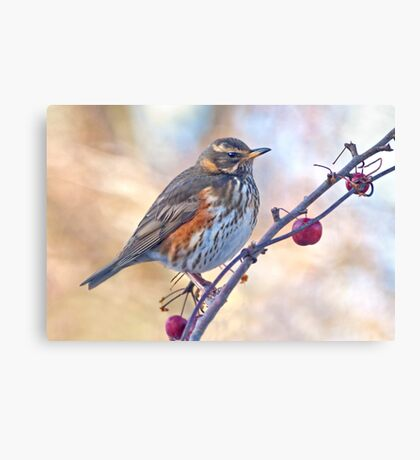 Redwing Canvas Print