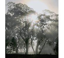 ~ Sunburst ~ Photographic Print