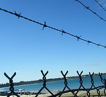 Barbed Wire by NaturalDisaster