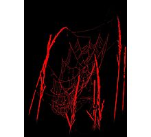 Spider Webs In Red Photographic Print