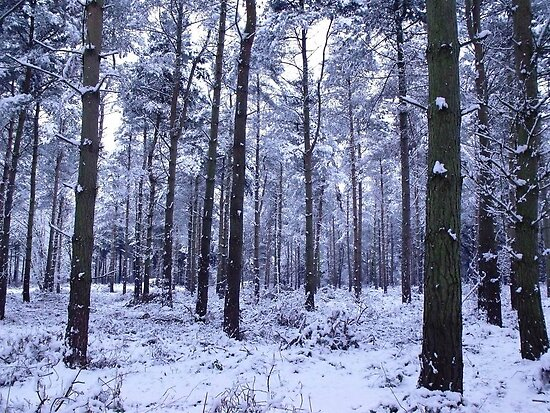 Snowy Woodlands by charlylou