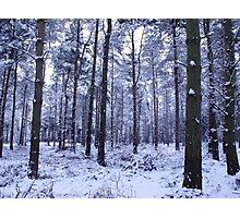Snowy Woodlands Photographic Print