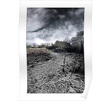 Purwell Woodland - Hitchin, Hertfordshire Poster