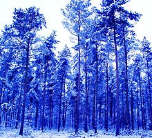 Snowy Blue Trees by charlylou