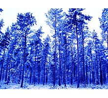 Snowy Blue Trees Photographic Print