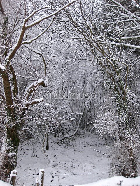 Secret Snow den by millymuso