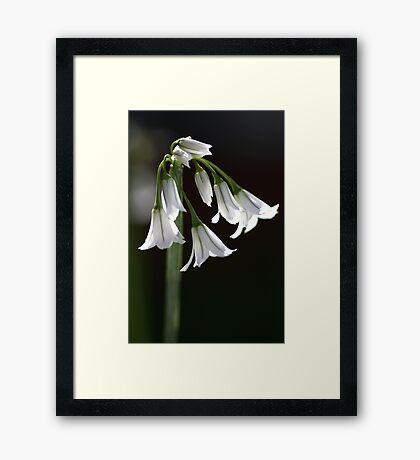 Angled Onion Weed Framed Print
