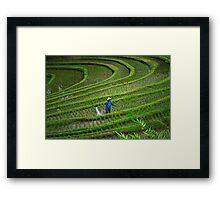 Rice Terraces, Bali, Indonesia Framed Print