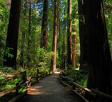 Alone With Giants - Muir Woods National Monument by Mark Heller