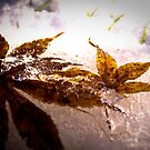frozen leaves by Laura Cutmore