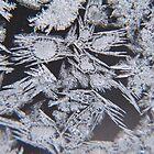 Jack Frost Window by Pamela Jayne Smith