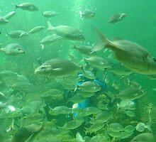 Fishes 1 by Alejandro Cuadra