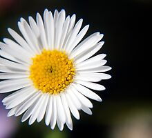 Sunny Side Up by Jacquelyne Drainville