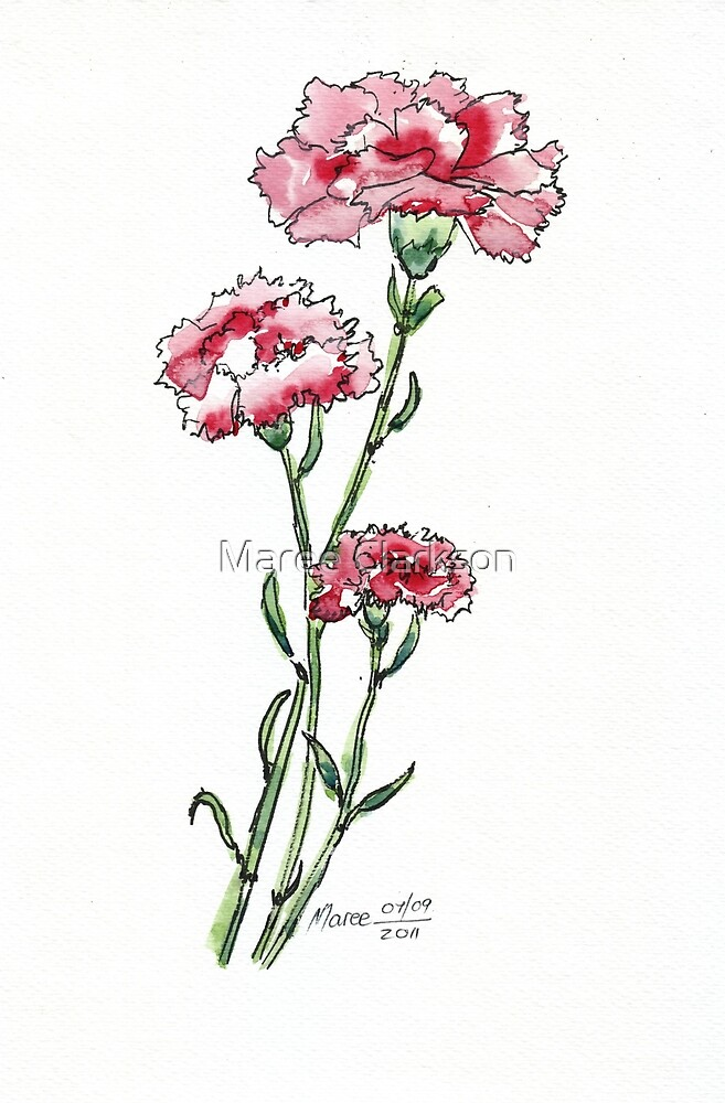 And a Pink Carnation... by Maree  Clarkson