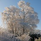 The ice tree, County Kilkenny, Ireland. by Andrew Jones