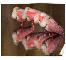 Spoonbill Naptime Poster