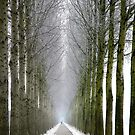 Endless Winter II by LarsvandeGoor