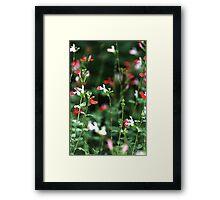 Sitting In The Garden Framed Print
