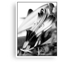 Back and white petal's Canvas Print