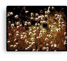 ~ Grass in the Wind ~ Canvas Print