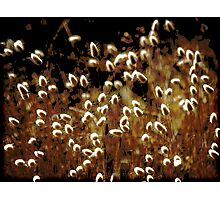 ~ Grass in the Wind ~ Photographic Print