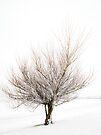 Magic Tree by Svetlana Sewell
