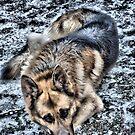 my loyal friend( BUD ) by TIMKIELY